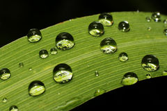 Dew drops close up blurred focus Royalty Free Stock Photo
