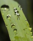 Dew drops close up blurred focus Stock Image