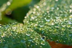 Dew drops close up. Dew drops closeup with bokeh Stock Photo