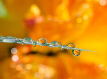 Dew drops close up Royalty Free Stock Photo