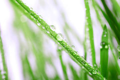 Dew drops close up Royalty Free Stock Photography
