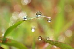 Dew drops close up Royalty Free Stock Photos
