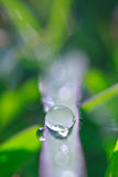 Dew drops close up Stock Image
