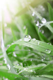Dew drops close up Stock Images