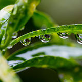 Dew drops close up Stock Photos