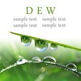 Dew drops closeup Stock Images