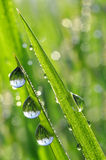 Dew drops closeup Royalty Free Stock Image
