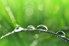 Dew drops closeup Stock Image
