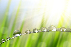 Dew drops closeup Royalty Free Stock Photo