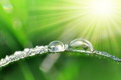 Dew drops closeup Stock Photography