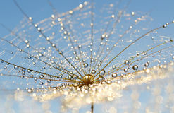 Dew drops on a dandelion seed Royalty Free Stock Photography