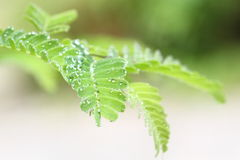 Dew drops on flower Royalty Free Stock Images