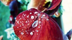 Dew drops on flower petal. Stock Photo