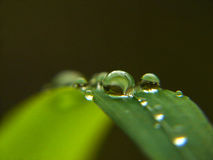 Dew drops in focus Royalty Free Stock Images