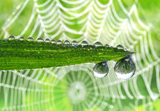 Dew drops Royalty Free Stock Images