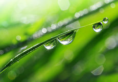 Dew drops. Fresh grass with dew drops close up Stock Photo