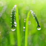Dew drops Royalty Free Stock Photos