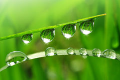 Dew drops Royalty Free Stock Photo