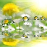 Dew drops Royalty Free Stock Photos