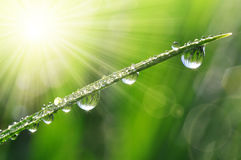 Dew drops Stock Image