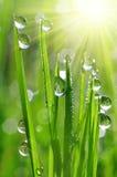 Dew drops Royalty Free Stock Photo