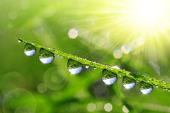 Dew drops. Fresh green grass with dew drops closeup. Nature Background Stock Photos
