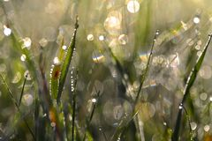 Dew drops on grass Royalty Free Stock Image