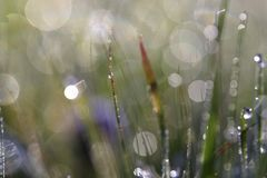 Dew drops on grass Royalty Free Stock Photography
