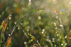 Dew drops on grass Stock Image
