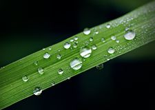 Dew drops on grass blade. Droplets of dew on fresh green grass Stock Images