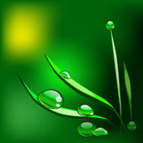 Dew drops on the grass blade. Vector Illustration Stock Photography