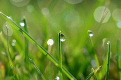 Dew drops on grass blades Stock Photos