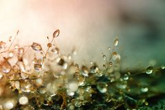 Dew drops on grass. And blurred bokeh background Royalty Free Stock Images