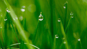 Dew Drops on Grass. D background shallow depth of field Royalty Free Stock Image