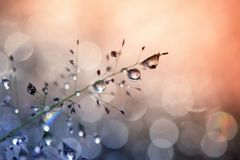 Dew drops on grass. And blurred bokeh background Royalty Free Stock Photo