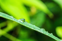Dew drops on grass. Fresh leaves  in  nature Royalty Free Stock Photo