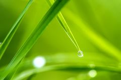 Dew drops on grass. In a meadow Stock Images