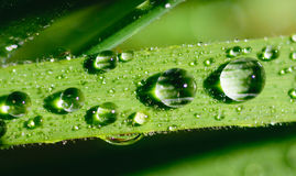 Dew drops on grass Stock Photos