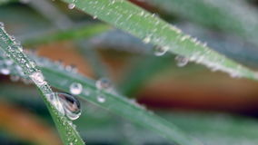 Dew drops on grass stock video footage