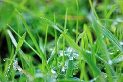 Dew drops in the grass in macro.  Royalty Free Stock Photography