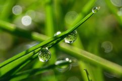 DEW DROPS ON THE GRASS. Macro photo of water droplets reflecting the grasses star shape Royalty Free Stock Photography