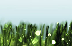 Dew drops on green grass. Defocused dew drops on green grass Royalty Free Stock Images