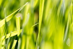 Dew drops on green grass Stock Images