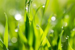 Dew drops on green grass Stock Image