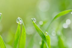 Dew drops on the green grass. macro.  Stock Image