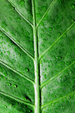 Dew drops on green leaf Royalty Free Stock Photos