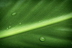 Dew drops on a green leaf Stock Images