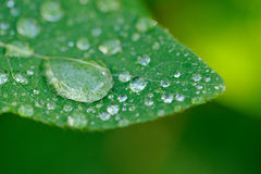 Dew Drops on Green Leaf Macro Royalty Free Stock Photos
