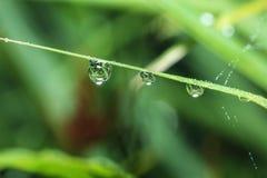 Dew drops Stock Image