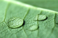Dew drops on leaf Royalty Free Stock Images